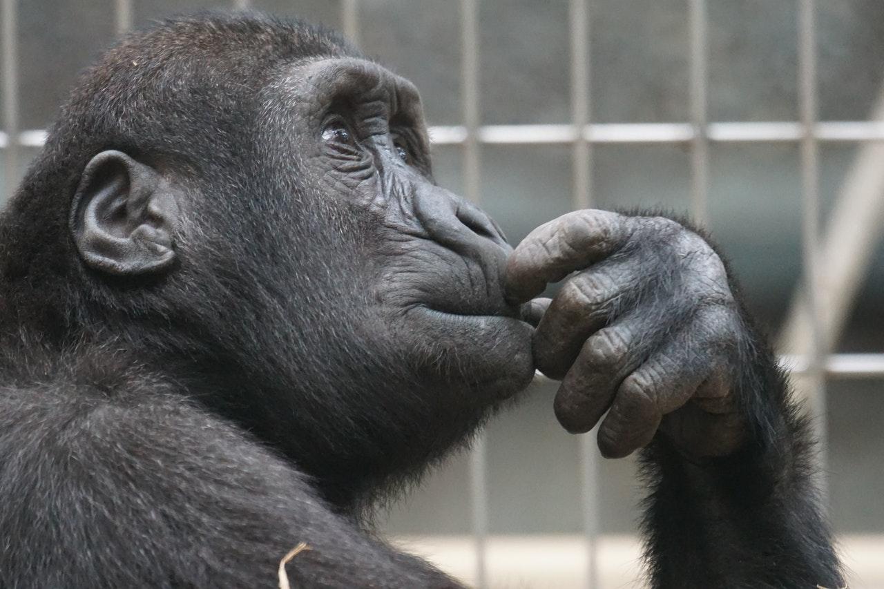 Monkey reasoning